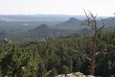 Dem's da Black Hills.  Custer State Park, South Dakota.