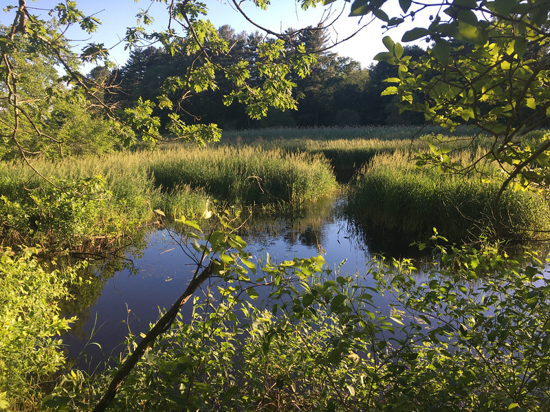 The evening was calm, as was the Shawsheen River in Billerica on the longest day of the year. Photo by Mary Leach