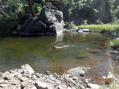Both dogs love swimming and will not walk by a water hole without jumping in.