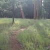 Wonderful trail around the lake