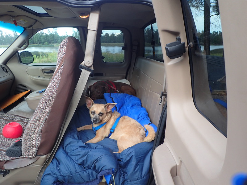 These two dogs are great travelers.  The back seat is their favorite spot.  My dog Ruby is the chocolate lab and my sisters dog Otis is the chiweenie.