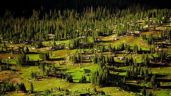 High Alpine Forest - Arapahoe Pass