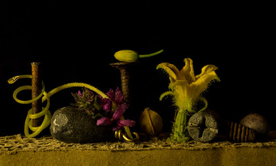 Untitled still life with sinker and cucumber vine