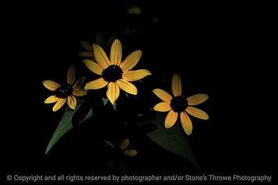 015-flower-wdsm-29jul17-12x08-007-0457