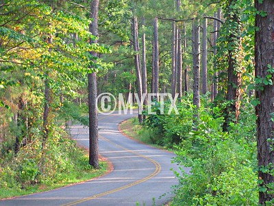Winding Through the Pines