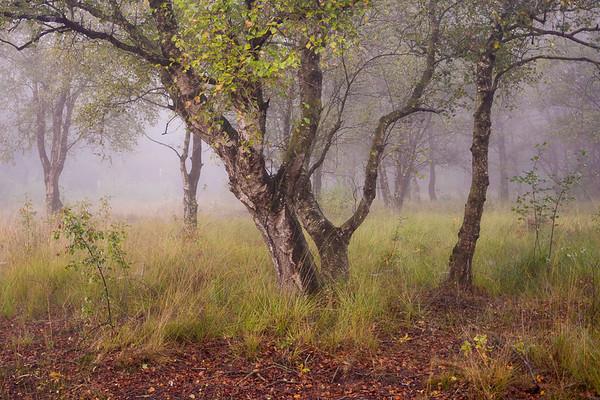 Distant Fog PB3584