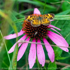 015-butterfly-wdsm-30aug18-03x03-006-350-7409