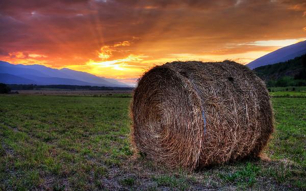 Lone Hay