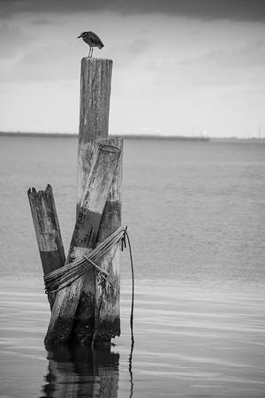 bird & pilings