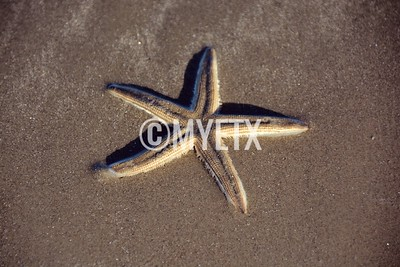 Beached Starfish