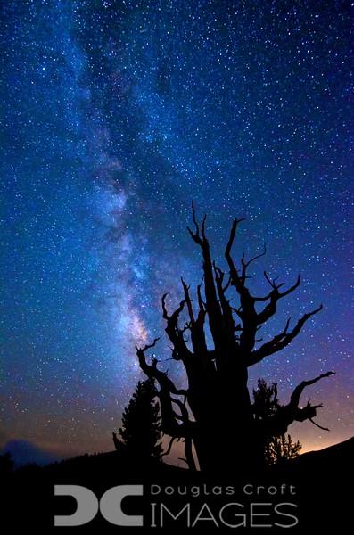 Milky Way - Bristlecone Pines
