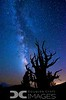 Milky Way - Bristlecone Pines