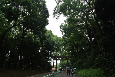 Meiji Shrine (6/28)