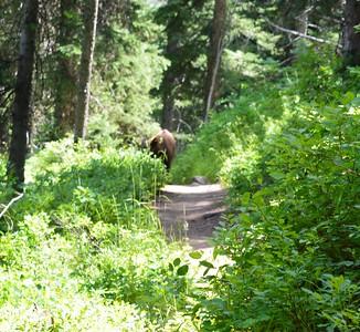 Day 6 - Wednesday, July 23rd (My 48th Birthday!!) – Wyoming