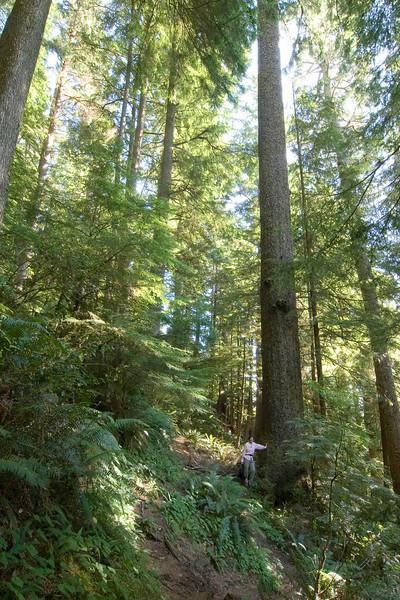 Ascending to Neahkahnie Ridge, Oregon.