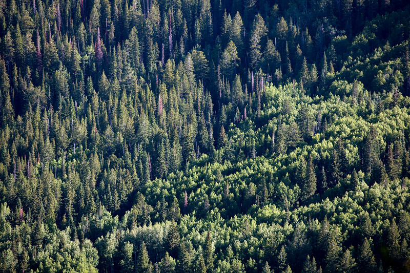 Mix of fir and aspen forests. No photo can do the density and expanse justice.