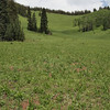 Periodically we would come upon these magnificent meadows, some the result of avalanches, and some the result of soil development. Unfortunately, this photo cannot capture the scale of this place.