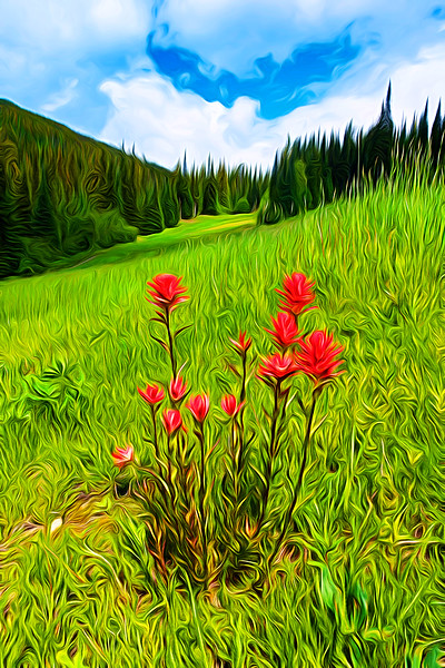 Indian Paintbrush Bouquet