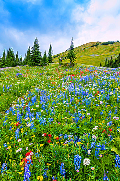 Mixed Meadow