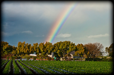 The Rainbow Field