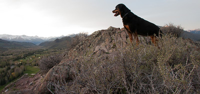 Kota taking in the view on her last hike.