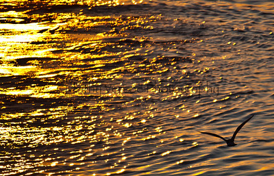 A bird flies across the golden sea as the sun sets. Taken from Brighton Pier, UK