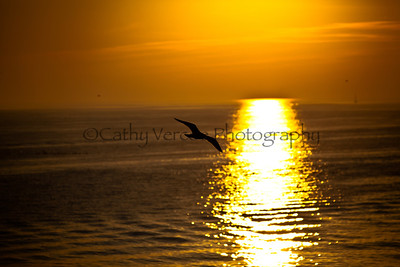 A bird sails across the trail of the setting sun. Taken from Brighton Pier, UK
