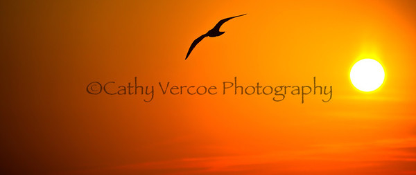 A bird flies against the setting sun. Taken from Brighton Pier, UK