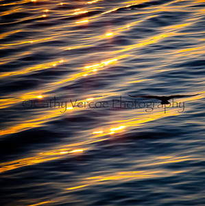 A bird silhouetted against the glow on the water from the setting sun. Taken from Brighton Pier, UK