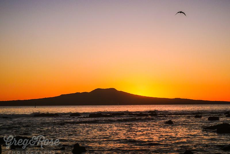 Bird flight at sunrise