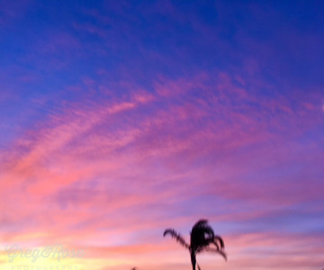 Sunrise set off against the Queen Palm on my morning walk