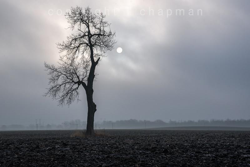 Lone Tree Sun