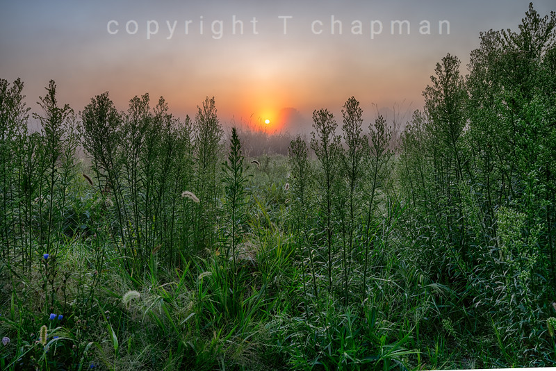 Tall Grass Sunrise
