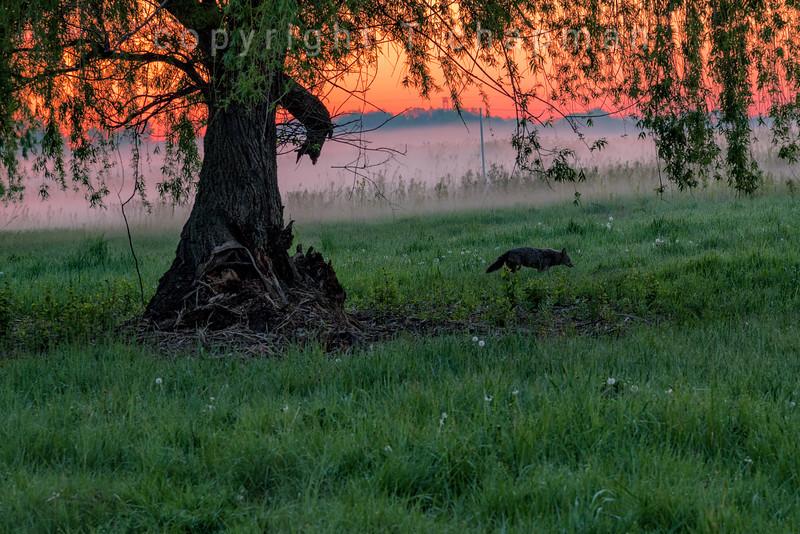 Beaver Hunt