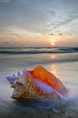 Sunset Shell