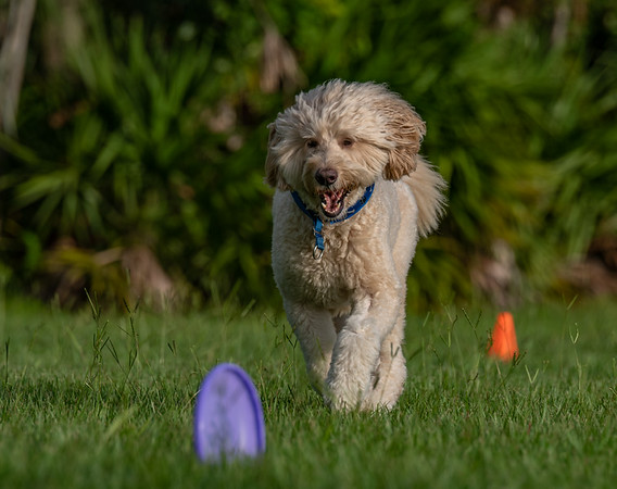 Suncoast Disc Dogs Toss and Fetch