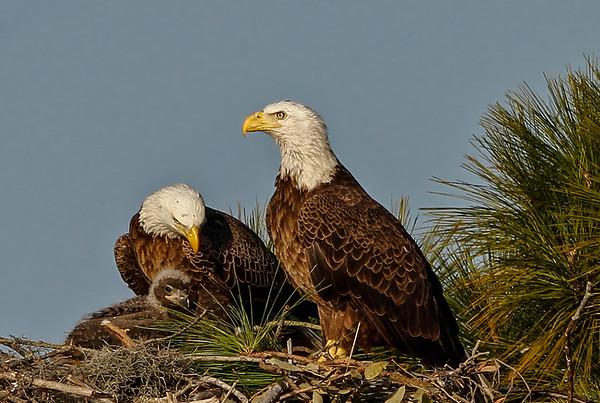 Suncoast Sierra Club - award images
