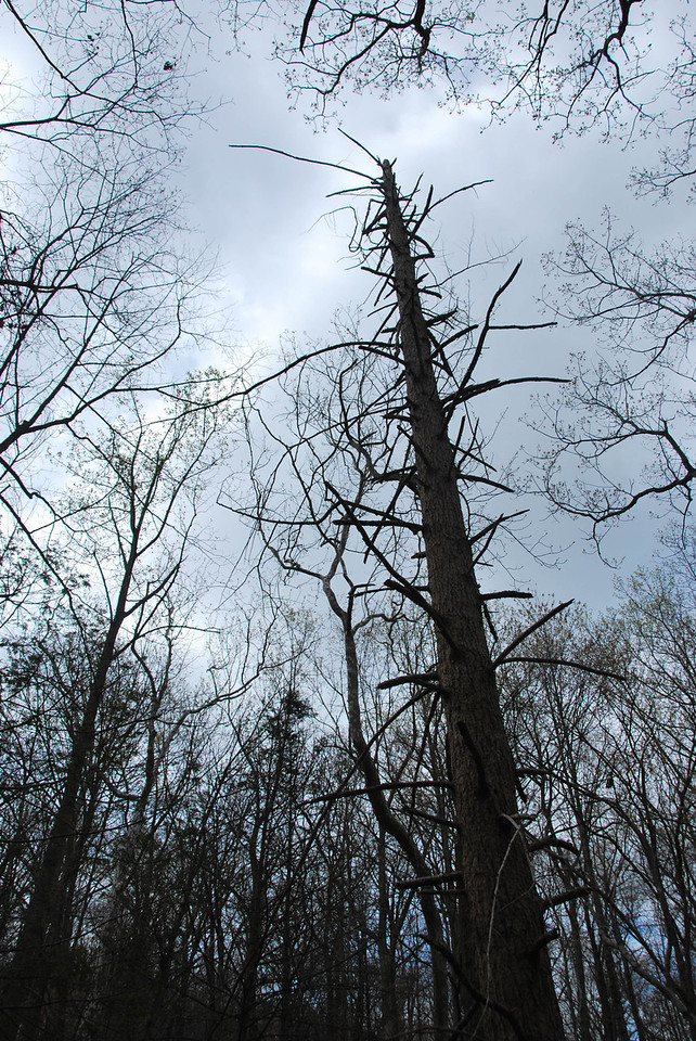 Pine Meadow Lake Hike 041512 (c) Daniel Yoffee 2012