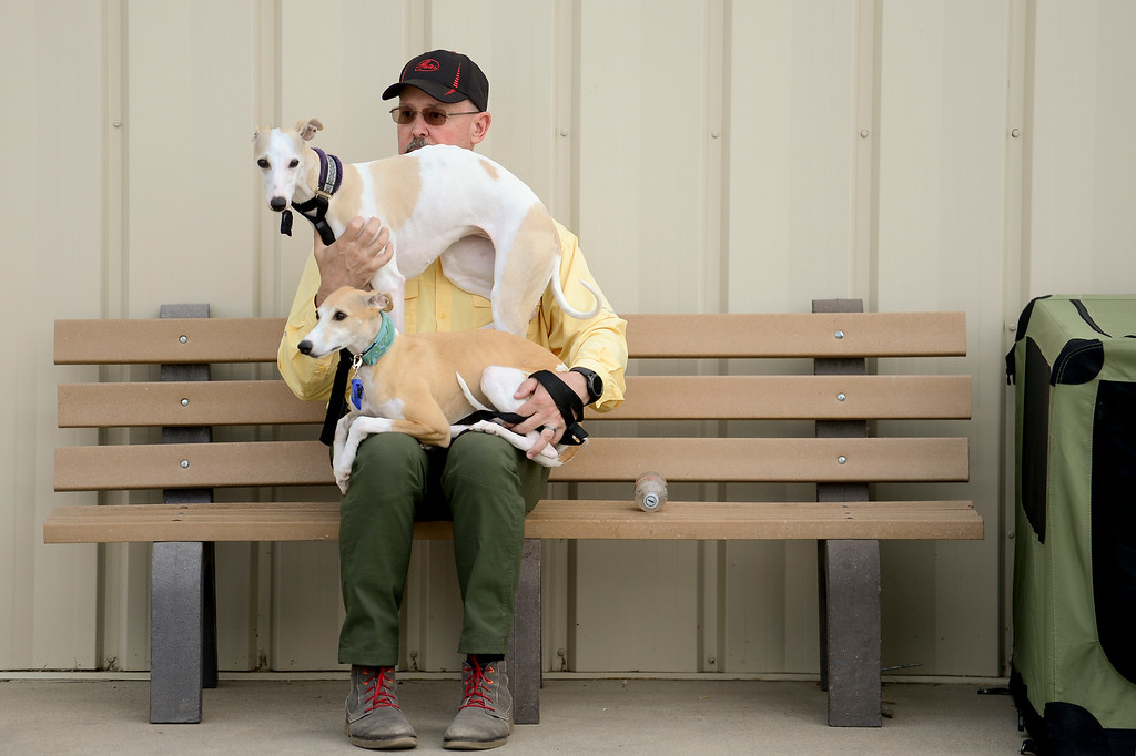 . Keith Zulauf, of Castle Rock, sits with a pair of Whippets, Katy, top, and Aria, bottom, after showing at the Flatirons Kennel Club show at the Boulder County Fairgrounds in Longmont, Colorado on June 3, 2018. (Photo by Matthew Jonas/Staff Photographer)