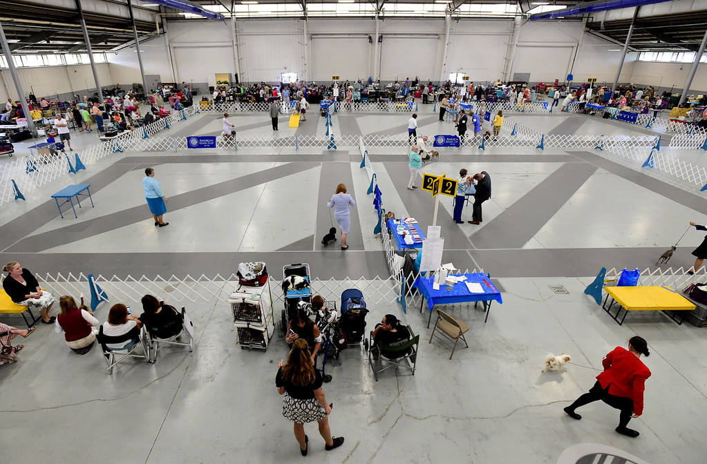 . Dogs are shown at the Flatirons Kennel Club show at the Boulder County Fairgrounds in Longmont, Colorado on June 3, 2018. (Photo by Matthew Jonas/Staff Photographer)