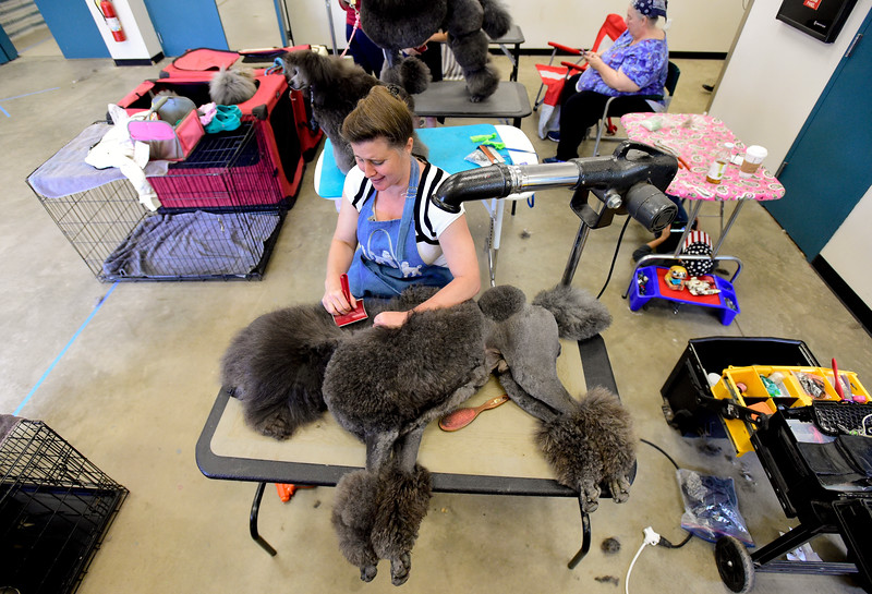 Dog Show Flatirons Kennel Club Longmont