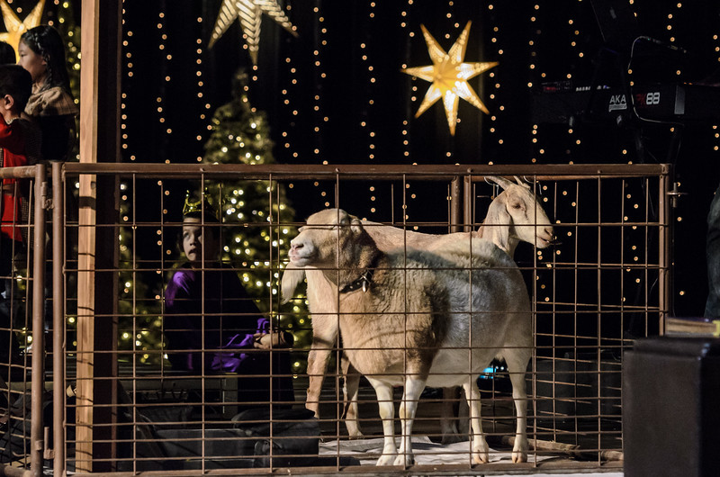 Saddleback Irvine South Worship Kids Christmas Pageant - photo by Allen Siu 2017-12-09