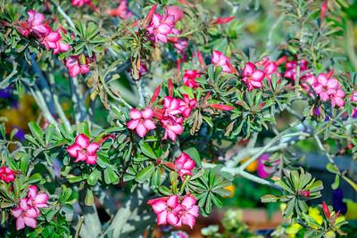 Bloom ...