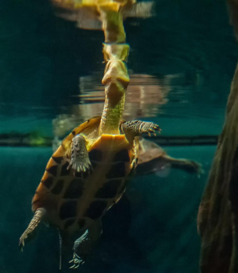 Stanley Park Aquarium