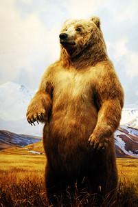 N.Y. Museum of Natural History