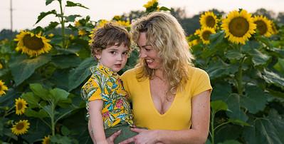 sunflowers-3922