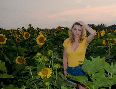 sunflowers-0682