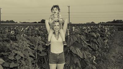 sunflowers-0664-3