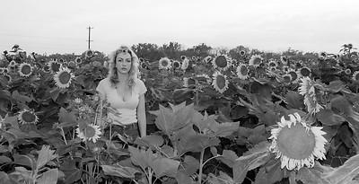 sunflowers-0676