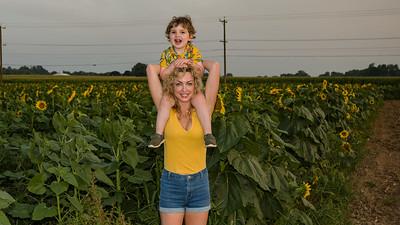 sunflowers-0664-2